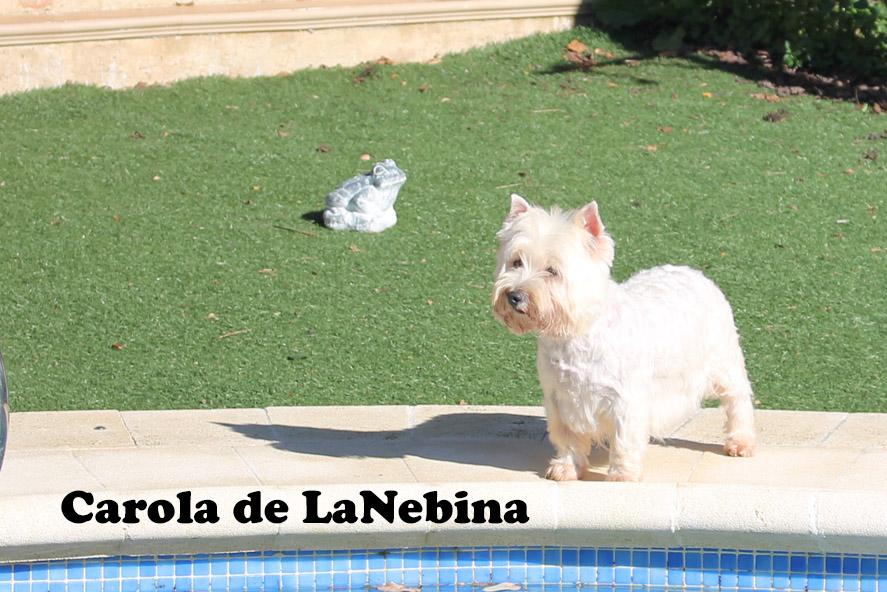 Carola-3-2014 Texto