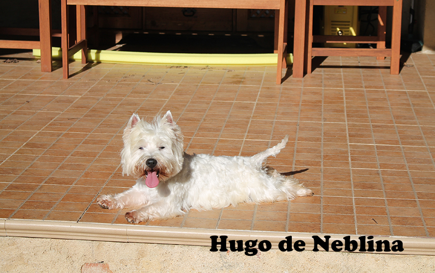 Hugo 393 texto