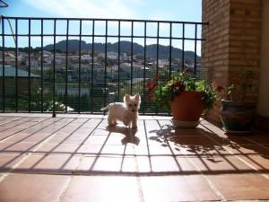 foto en la terraza de casa
