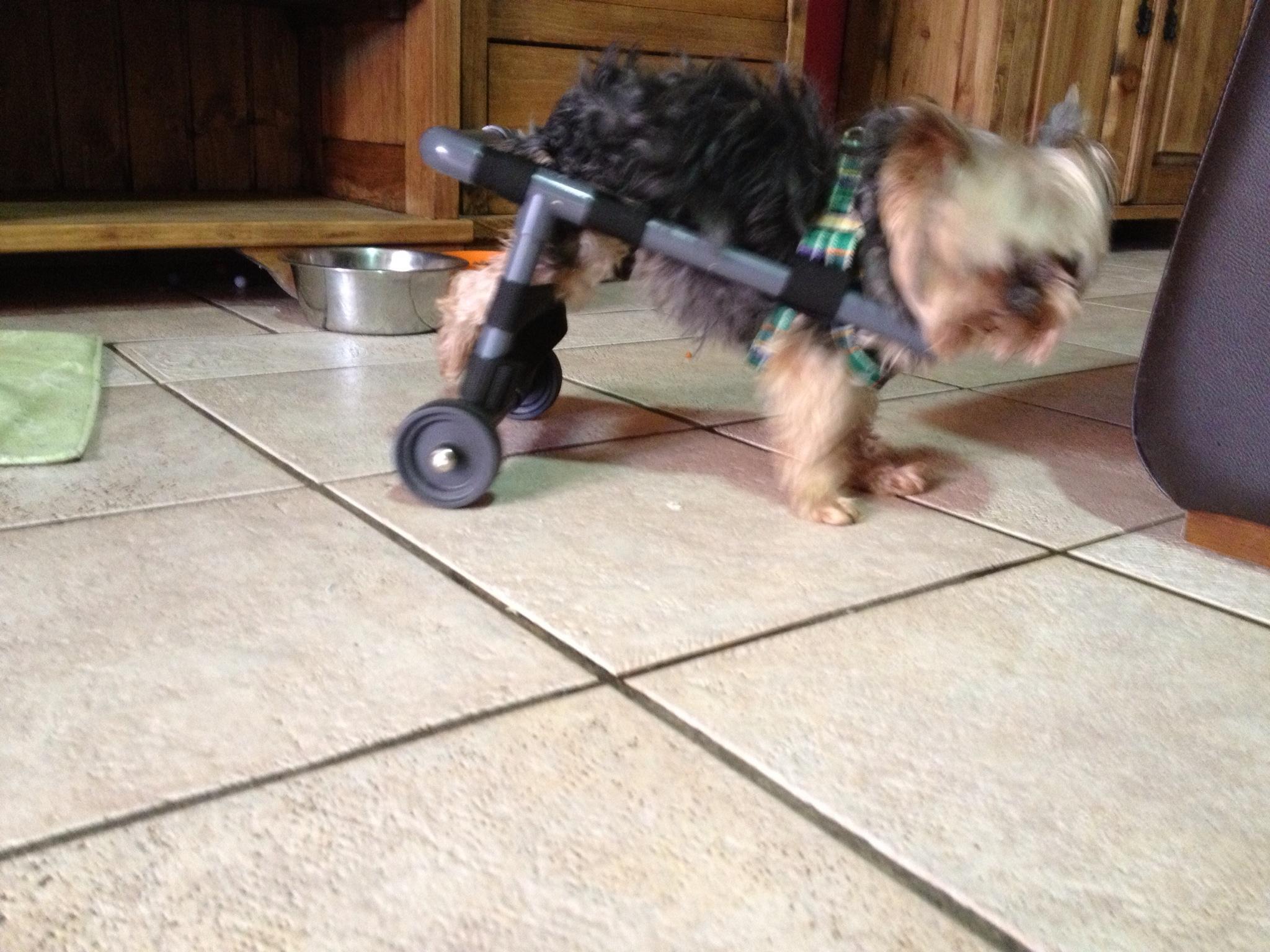 Sillas de ruedas para perros la neblina for Sillas para perros