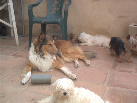 Criadero Canino LaNeblina