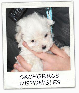 polaroid_cachorro_maltes