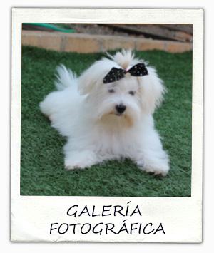 polaroid_galeria_maltes